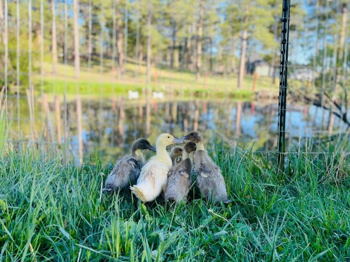 Gillespie Farm AnimalUpdate